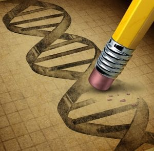 Genetic engineering and DNA manipulation as the biotechnology science of genetically modified foods or living organisms with an image of a dna strand on a parchment texture being changed by a pencil eraser.